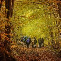 randonnée dans la forêt des Coulmes